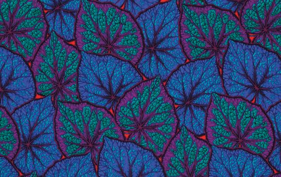 Begonia Leaves Cobal 1,14m*13,7m - 40.00 lei