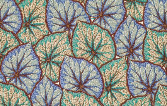 Begonia Leaves Greyx 1,14m*13,7m - 40.00 lei