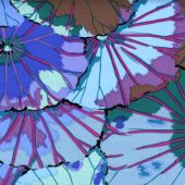 Lotus Leaf 0Blue 1,14m*13,7m - 40.00 lei